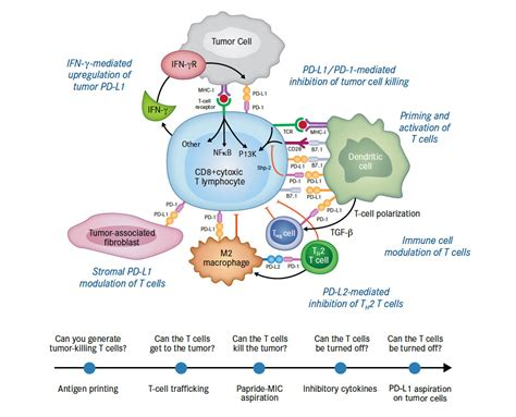 of anti pd 1 pd l1 immunotherapy in cancer page 11