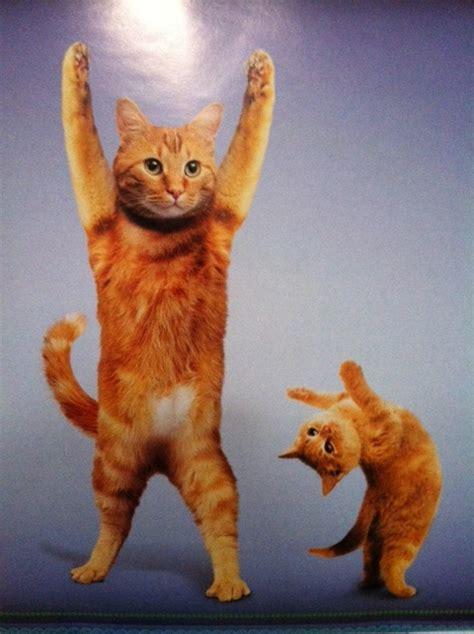 Funny Cats Doing Yoga Poses   laughspark.com