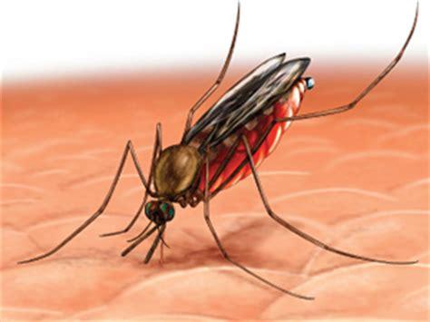 L Malaria by El Tratamiento Contra La Malaria M 225 S Barato