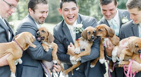 puppy bouquet wedding chooses rescue puppies bouquets for best wedding photos rover