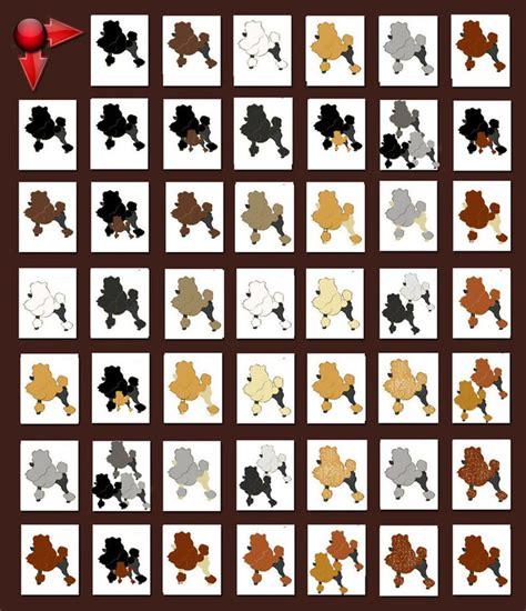 color genetics genetics coat color s standard poodles