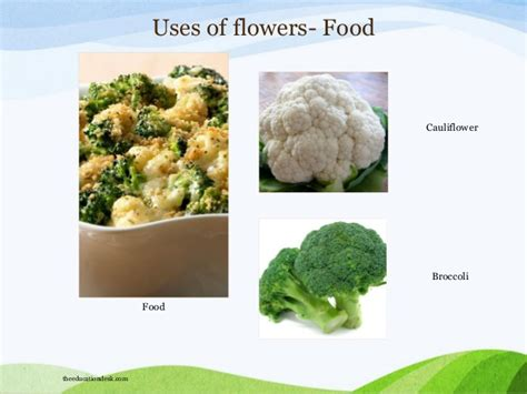 how to make flower food environmental science evs plants and trees class i