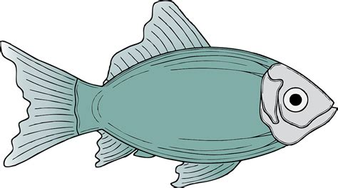marine fish clipart ikan pencil and in color marine fish
