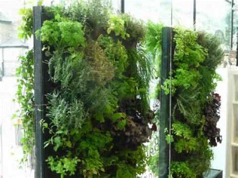 Green Wall Planters by Green Wall And Planter Projects By Maximize Design
