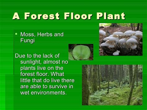 10 Facts About The Forest Floor by The Four Layers Of The Rainforest Emmas Project2
