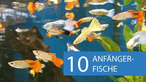 video empfehlung  aquarium fische fuer anfaenger
