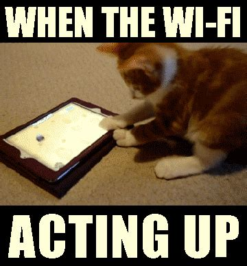 Funny Animated Memes - wifi going down in cat interpretive dance animated gif