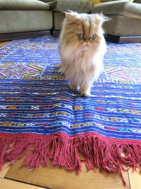 best rug for cats how to choose a rug for a cat friendly home meow lifestyle