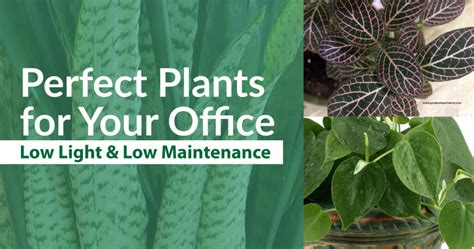 best plants for low light plants perfect for your office low light and low maintenance