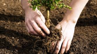 tree planting care at arborday org