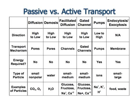 passive and active transport venn diagram active transport vs passive transport venn diagram www