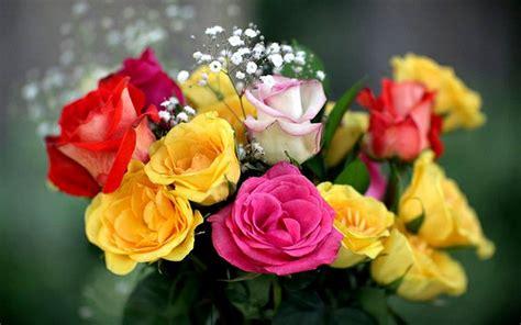 imagenes de flores margaritas im 193 genes de flores 174 fotos de rosas margaritas o lirios