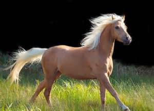 palomino color common coat colors slideshows thehorse