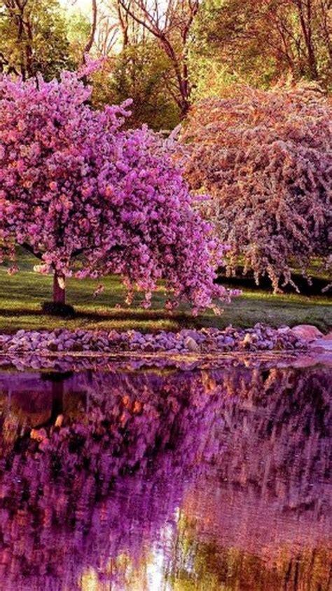 Spring Nature Wallpapers Hd   impremedia.net