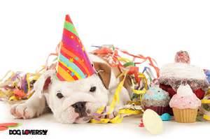 dog birthday cake recipes and dog party ideas