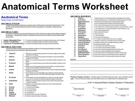 Planes And Anatomical Directions Worksheet Answers by Terminology Anatomical Position Directional Terms