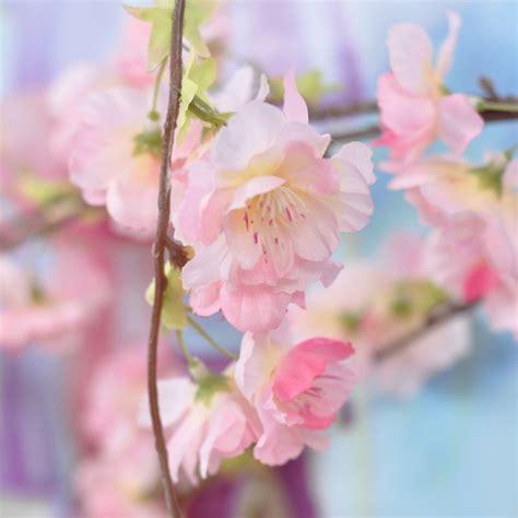 sfondi fiori di pesco ramo fiori di pesco 1 2 m con tre rami pendenti wimipops