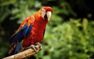 macaw parrot wallpapers fun animals wiki videos