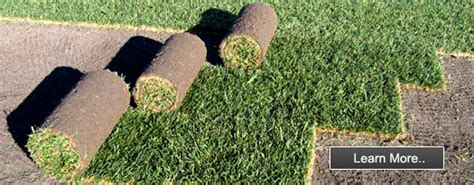 santa ana couch seed anco lawnstore buffalo lawn weed control