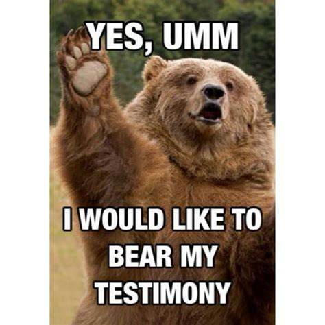 Truth Bear Meme - 26 best images about bear memes on pinterest bipolar