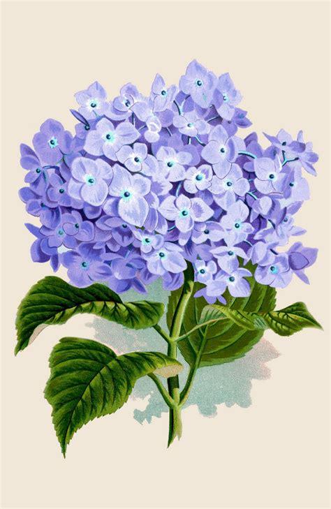 printable retro art vintage printable instant art amazing purple hydrangea