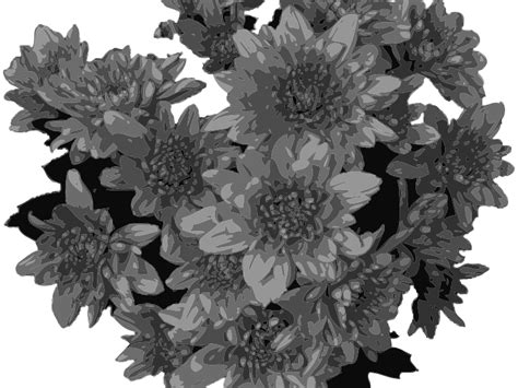Grey Flower clipart flowers in greyscale