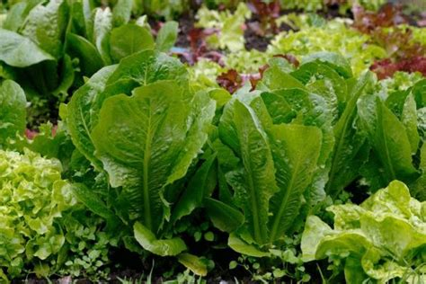 10 tips on growing vegetable plants