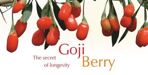 Jual Goji Berry cestino croccante di gran mugello e hummus di fave dolceamaro