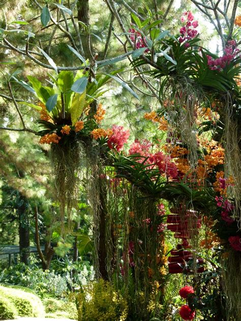 plants in singapore botanic gardens orchid botanical garden singapore nature plants gardens orchid singapore