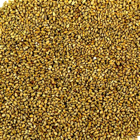 Millet For The And pearl millet societa cofica