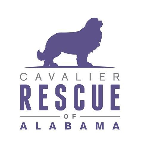rescue alabama pet rescue pet adoption animal rescue birmingham al