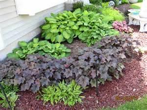 shade plants green thumb pinterest