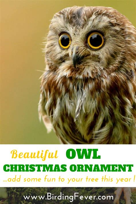 images  bird christmas ornaments