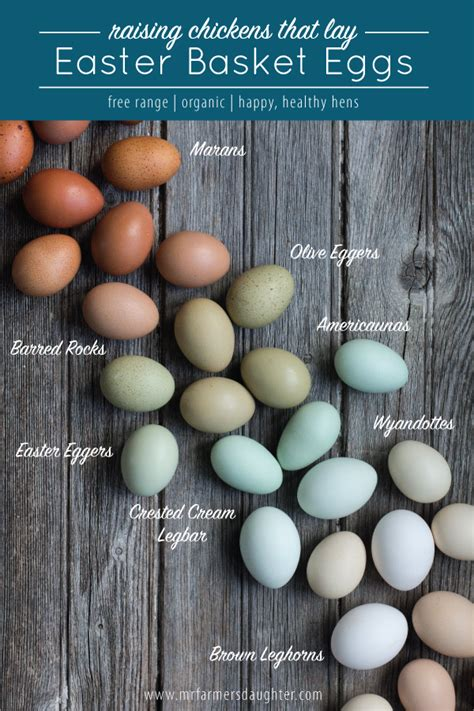 chicken egg colors columbian rock chicken egg color
