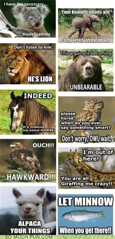 images  puns  pinterest jokes alpacas