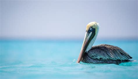 pelican boat curacao local tips for your day trip to klein curacao 1st day of