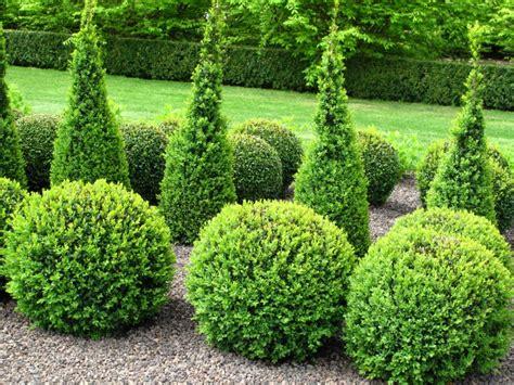 beet mit buchsbaum gestalten 16 marvellous topiary ideas live diy ideas