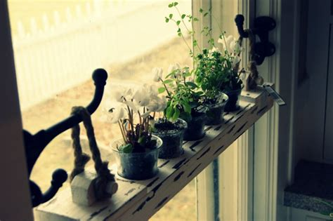 Hanging Herbs In Kitchen Window by Diy 20 Ideas Of Window Herb Garden For Your Kitchen