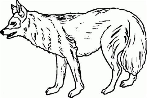 imagenes animales salvajes para colorear animales salvajes para colorear