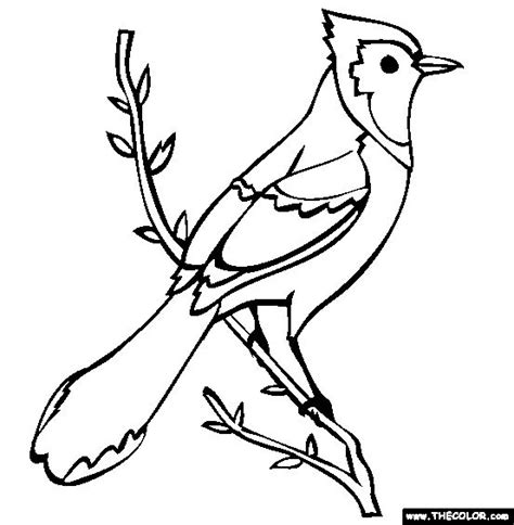 bird to color blue jay coloring page free blue jay