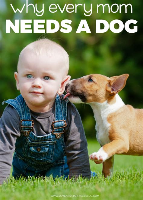 when should puppies get 5 reasons every should get a