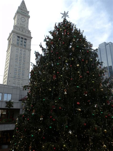 world s largest tallest christmas trees delivery