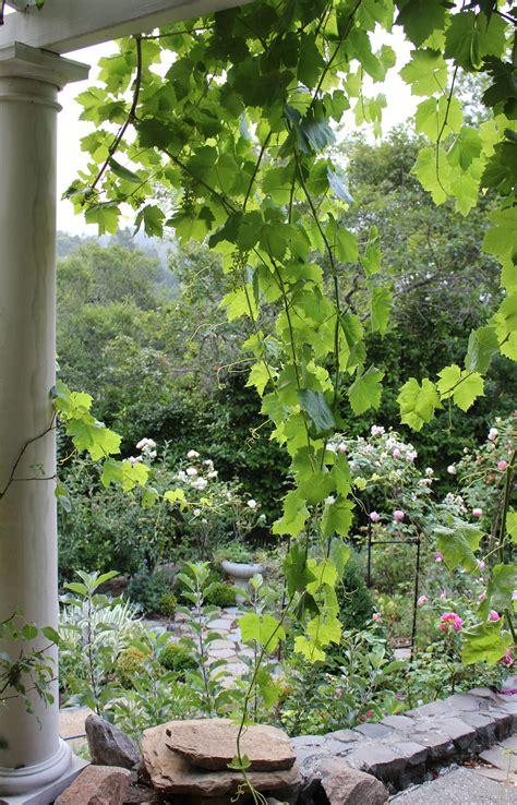 backyard vines stepping stones trouvais