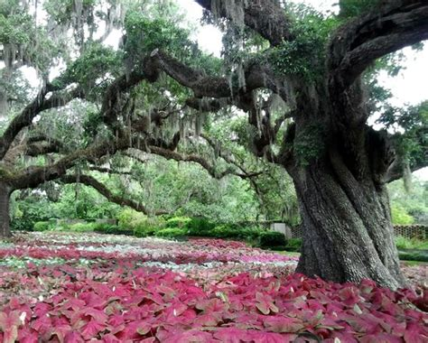 brookgreen gardens murrells inlet sc top tips before