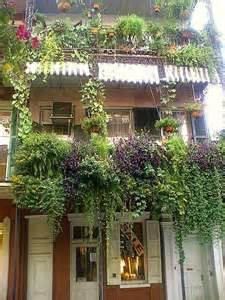 Apartment Plants And Flowers The Quarter Of New Orleans With Its Signature