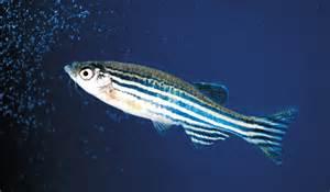 Summer Thornton Video The Effects Of Prozac On Zebrafish