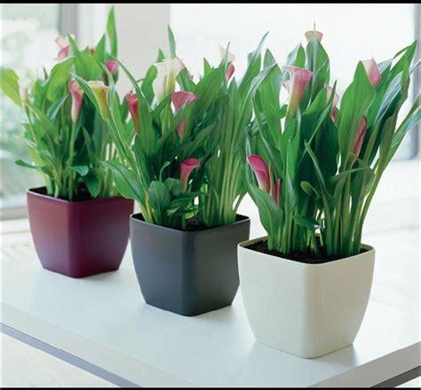 decoracion de interiores con plantas y flores plantas de interior 2015 decoracioninteriores net