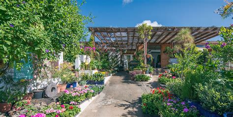 Flower Power Garden Centre Lanzarote Information Flower Power Garden Centre