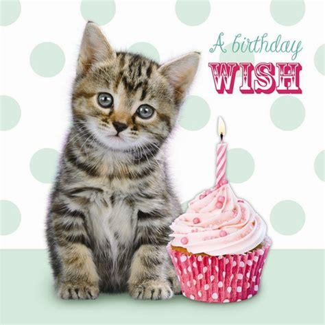 Free Cat Birthday Cards Happy Birthday Kittens Free Ecards Greeting Cards Cute Cat