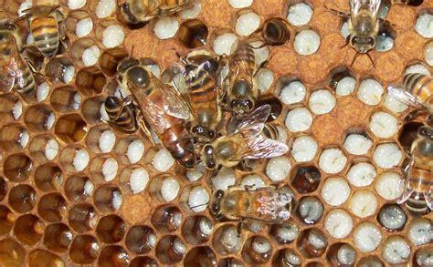 minicuentos de abejas y 8448838475 reflexiones sobre apicultura reflexiones sobre la apicultura con abejas africanizadas